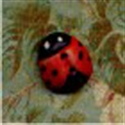 Picture of Lady Beetle